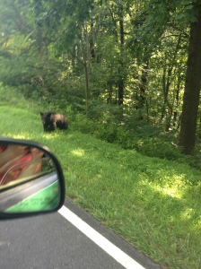 Bear at Shenandoah